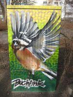 buchfink2